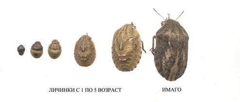 tscherepaschka-4.jpg